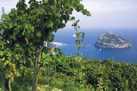 Immagine per la categoria Bianchi dal Mare